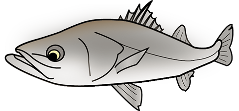 seabass.png
