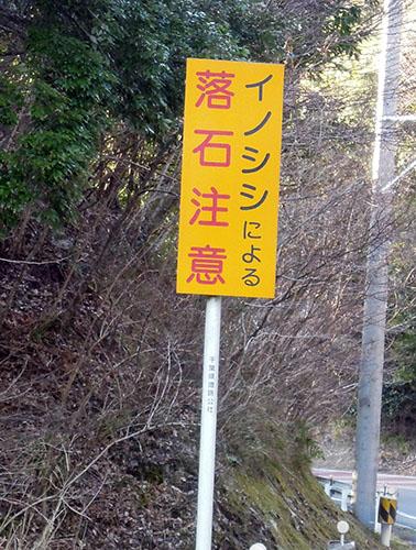 inoshishi.jpg